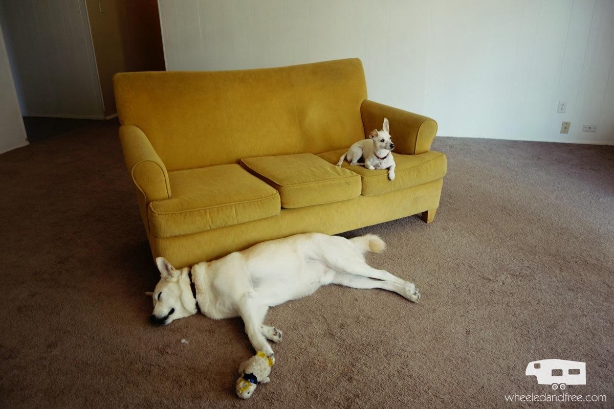 wf-lazy-dogs